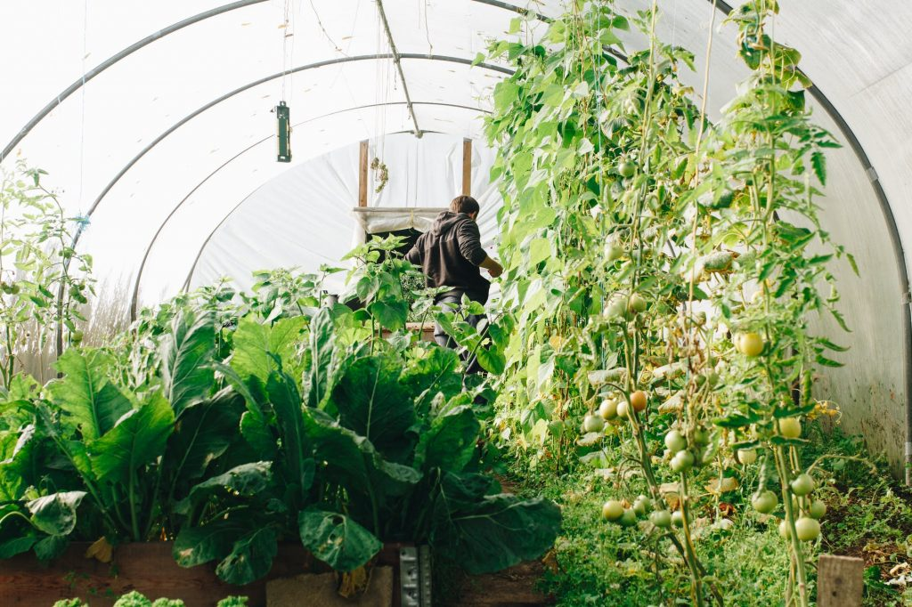 Best Greenhouse Kits For Cold Weather In 2021 1
