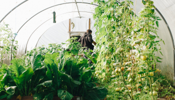 Best Greenhouse Kits For Cold Weather In 2021